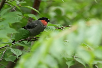 soku_28972.jpg :: 動物 鳥 野鳥 自然の鳥 未記入鳥
