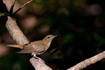soku_29008.jpg :: 動物 鳥 野鳥 自然の鳥 未記入鳥