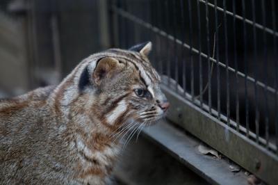 soku_29030.jpg :: 動物 哺乳類 猫 ネコ