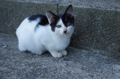 soku_29068.jpg :: 動物 哺乳類 猫 ネコ 子猫