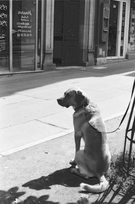 soku_29088.jpg :: 街並み 都市の風景 犬