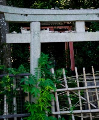 soku_29093.jpg :: 建築 建造物 神社 鳥居
