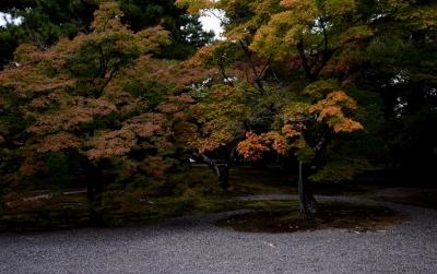 soku_29130.jpg :: 風景 自然 紅葉 その他