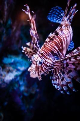 soku_29137.jpg :: 風景 自然 海 海中 魚