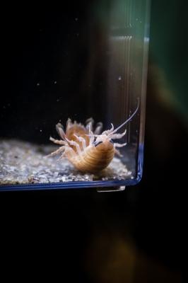 soku_29147.jpg :: 動物 ペット その他の魚類、水生生物