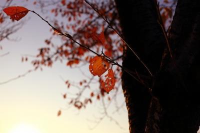 soku_29213.jpg :: 風景 自然 紅葉 赤い紅葉