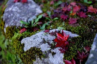 soku_29220.jpg :: 風景 自然 紅葉 落ち葉