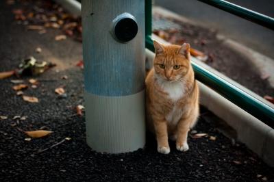 soku_29232.jpg :: 動物 哺乳類 猫 ネコ