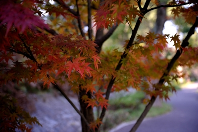 soku_29290.jpg :: 風景 自然 紅葉