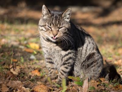 soku_29302.jpg :: 動物 哺乳類 猫 ネコ