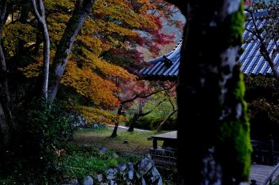 soku_29308.jpg :: 風景 自然 紅葉 寺社の紅葉