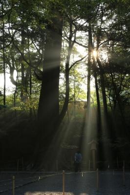 soku_29326.jpg :: 風景 自然 逆光