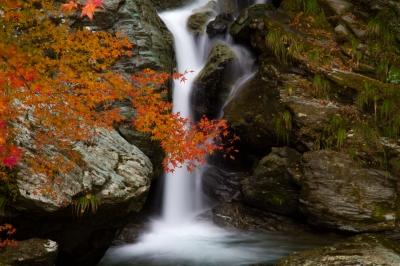soku_29332.jpg :: 風景 自然 紅葉 水分 滝