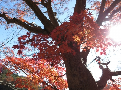 soku_29353.jpg :: PowerShotG15 風景 自然 コンデジ埼玉 lock 湖 間瀬湖 紅葉 赤い紅葉