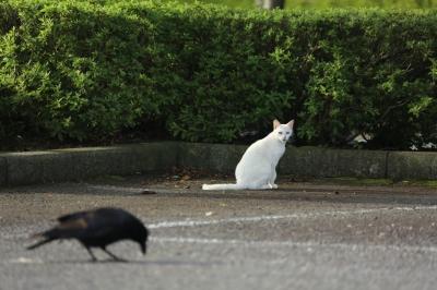 soku_29370.jpg :: 猫とカラス