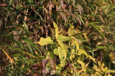 soku_29395.jpg :: test 7d 植物 草葉 雑草 資料 サンプル