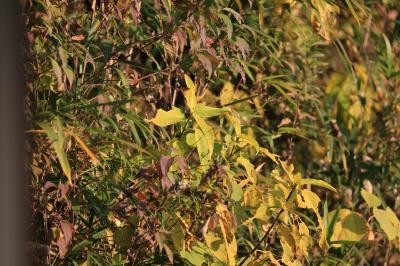 soku_29396.jpg :: test 6d 植物 草葉 雑草 資料 サンプル