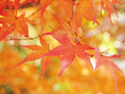 soku_29398.jpg :: PowerShotG15 コンデジ埼玉 lock 風景 自然 紅葉 赤い紅葉