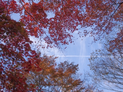 soku_29404.jpg :: 風景 自然 紅葉 赤い紅葉