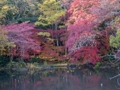 soku_29406.jpg :: 風景 自然 紅葉 赤い紅葉