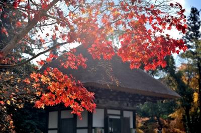 soku_29435.jpg :: 風景 自然 紅葉 寺社の紅葉