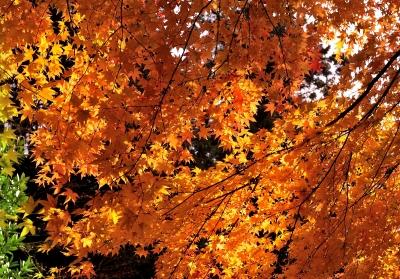 soku_29441.jpg :: 風景 自然 紅葉