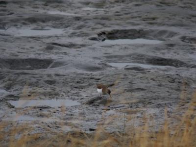 soku_29522.jpg :: 動物 鳥 野鳥 自然の鳥 未記入鳥