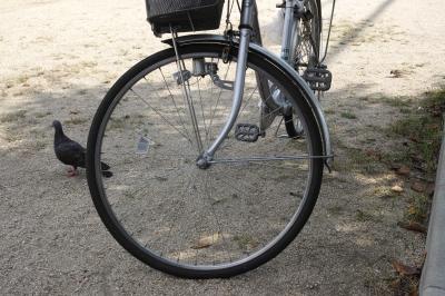 soku_29543.jpg :: 動物 鳥 鳩 ハト 乗り物 自転車