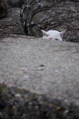 soku_29722.jpg :: 動物 哺乳類 猫 ネコ
