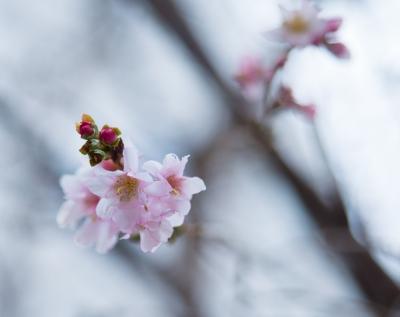 soku_29727.jpg :: 植物 花 ピンクの花 桃