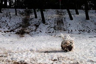soku_29802.jpg :: 風景 街並み 公園 雪だるま