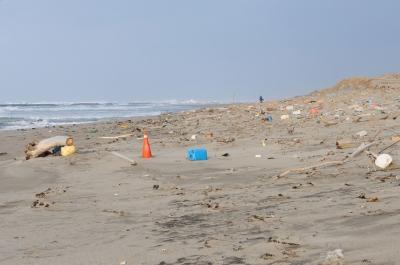 soku_29886.jpg :: 風景 自然 海 砂浜 ゴミ 犬散歩