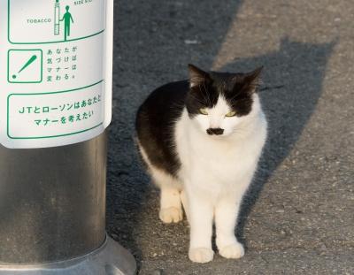 soku_29891.jpg :: 動物 哺乳類 猫 ネコ 野良猫