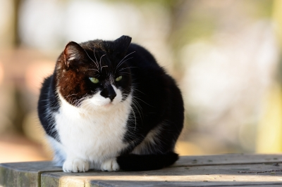 soku_29892.jpg :: 動物 哺乳類 猫 ネコ
