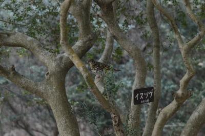 soku_29899.jpg :: 風景 樹木 動物 鳥 野鳥 自然の鳥 未記入鳥