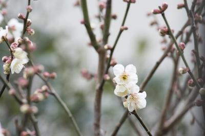 soku_29928.jpg :: 風景 植物 花 白い花
