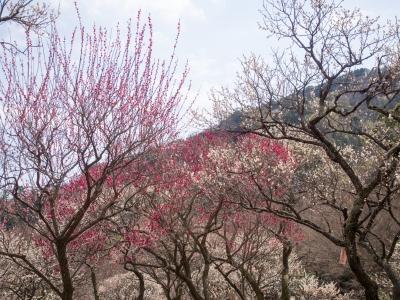 soku_29949.jpg :: 植物 花 自然 風景