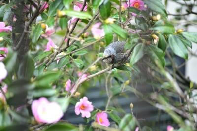 soku_29973.jpg :: 動物 鳥 野鳥 自然の鳥