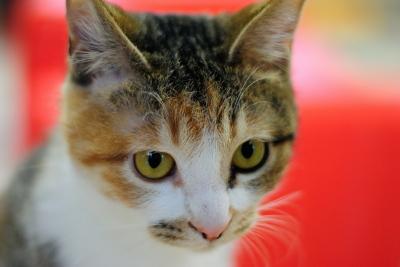 soku_29988.jpg :: 動物 哺乳類 猫 ネコ