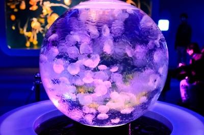 soku_30074.jpg :: 動物 海の生物 クラゲ