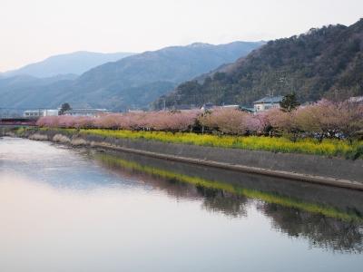 soku_30082.jpg :: 風景 自然 山 川 桜 菜の花