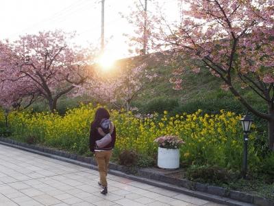 soku_30084.jpg :: 植物 花 桜 菜の花 人物 人と風景
