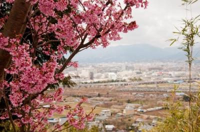 soku_30121.jpg :: 風景 自然 山 桜