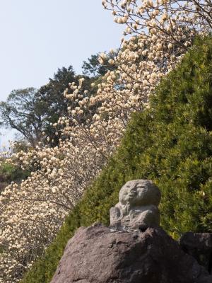 soku_30158.jpg :: 風景 自然 木蓮 ハクモクレン 仏像 お地蔵様