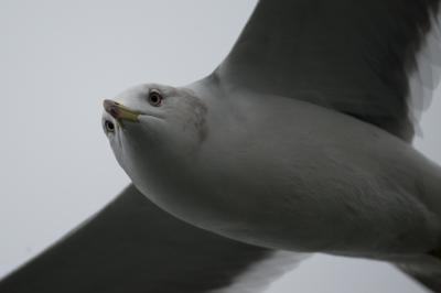 soku_30175.jpg :: 鳥 野鳥