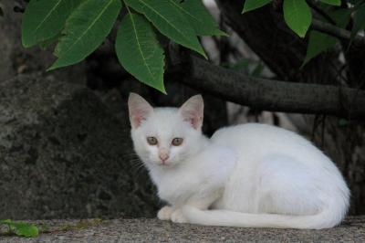 soku_30213.jpg :: 動物 哺乳類 猫 ネコ by Niigata