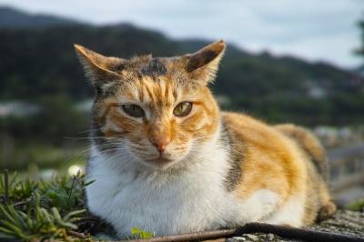 soku_30230.jpg :: 動物 哺乳類 猫 ネコ