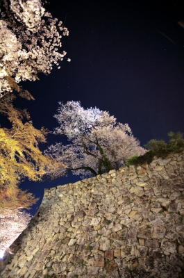 soku_30288.jpg :: 植物 花 桜 サクラ 夜桜 満開 建築 建造物 城 津山城