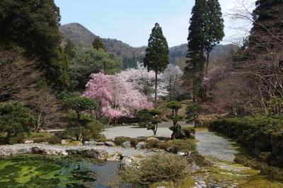 soku_30317.jpg :: 風景 自然 池 サクラ