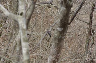 soku_30343.jpg :: 動物 鳥 野鳥 自然の鳥 未記入鳥
